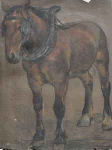 nac_Paard DSC_1188